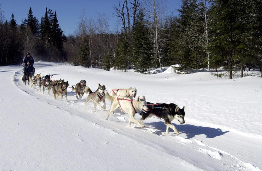 activité chien traîneaux vallée des merveilles